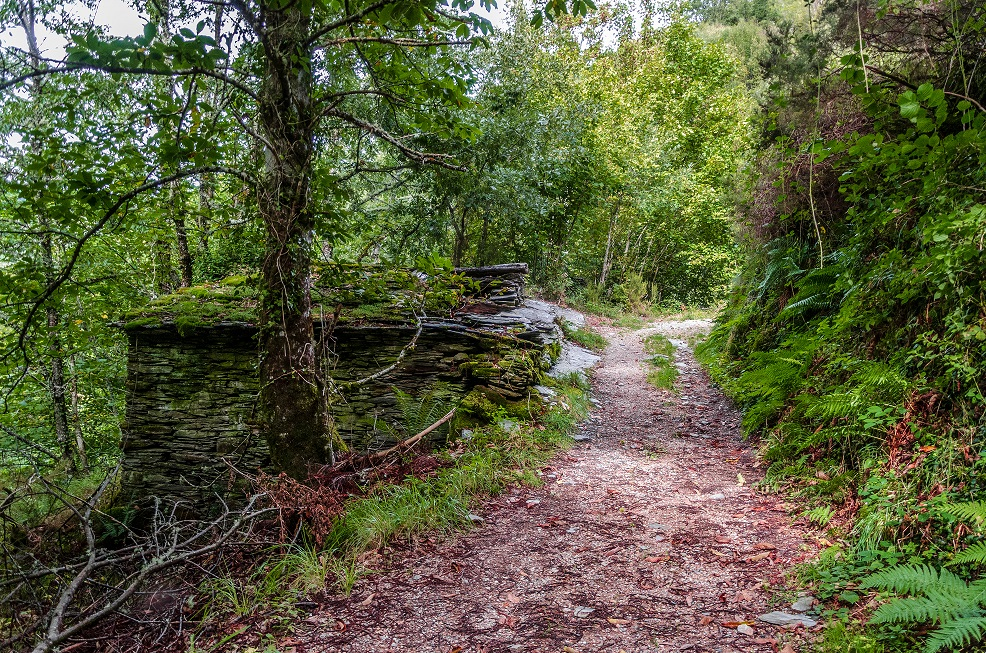 devesa da rogueira bosque atlántico galicia